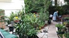 BB trädgård