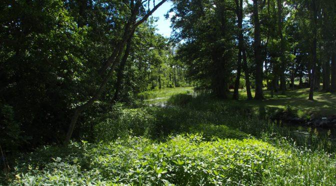 Näckrosleden 2018-06-30 Etapp 10 Mariefred – Gnesta Etapp 1 Gnesta – Trosa